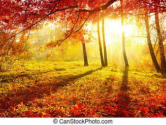가을의, 나무, leaves., 가을, park., 가을