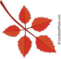 가을의 잎, 가지