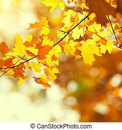 가을의 잎, 황색