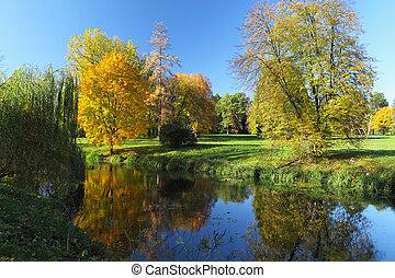 가을, 강, 황색, 나무