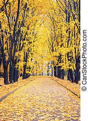 가을, 공원, 골목