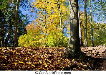 가을, 공원, 다채로운, 가을