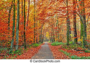 가을, 공원, 다채로운