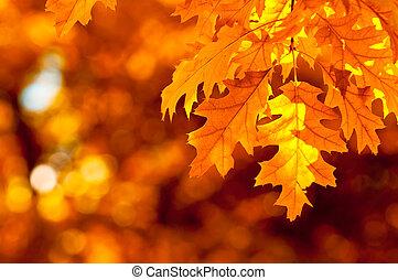 가을, 매우, 얕은 초점, 잎