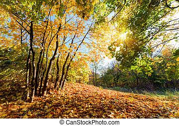 가을, 숲, 조경술을 써서 녹화하다, 가을