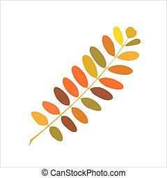 가을, 아카시아, 가지