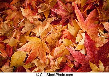 가을, 은 잎이 난다