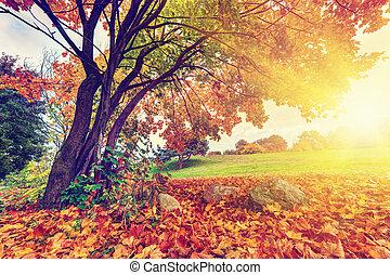 가을, 잎, 가을, 다채로운, 공원