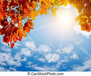 가을, 태양, 잎, 광선, 황색