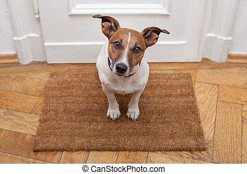 가정, 환영, 개