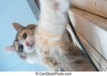 가정, selfie, 고양이