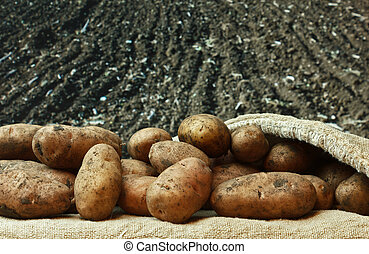 감자, 땅, 배경, 농업의