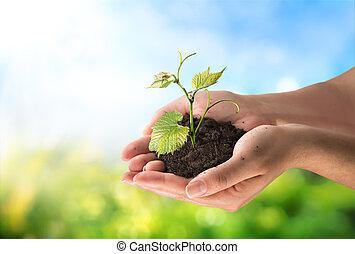 개념, 농업, 거의, 식물