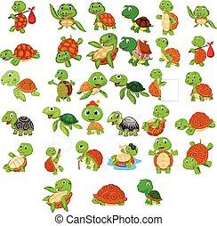 거북, 세트, 만화, 수집
