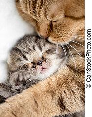 거의, 고양이 새끼, 어머니, 고수하는 것, 고양이