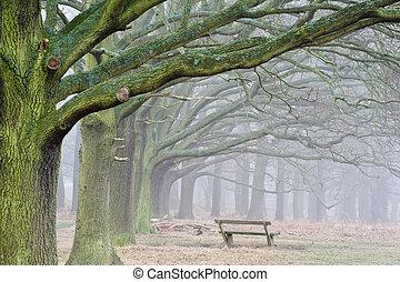 겨울의 나무, 가을 숲, 가을, 안개가 지욱한, 수단, 조경술을 써서 녹화하다