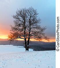겨울의 자연, -, 나무 조경, 다만 ...만, 뿐, 해돋이