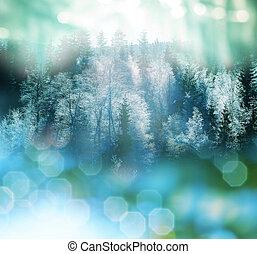 겨울, 숲