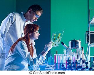 견본, 의약, 과학자, 공부