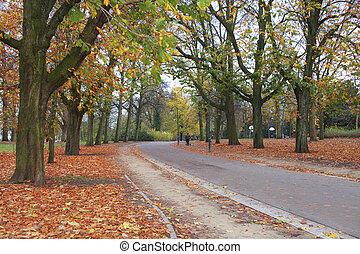 계절, 공원, 가을