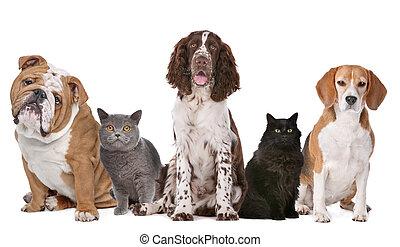 고양이, 개, 그룹