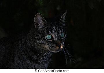 고양이, 눈, 아름다운, dark., 녹색