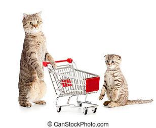 고양이, 쇼핑, 어머니, 손수레, 고양이 새끼