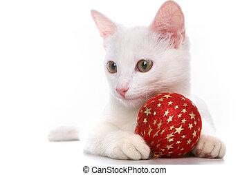 공, 빨강, 고양이