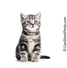 귀여운, 고립된, 고양이, 검정, 고양이 새끼, 백색