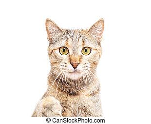 귀여운, 노려보는, 고양이, 카메라., 초상