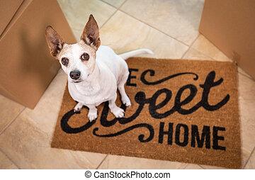 귀여운, 바닥, 단 것, 상자, 가정, 착석, 개, 매트, 환영