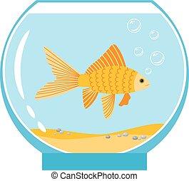 금 물고기, 사발, 고립된, 삽화, 물, 배경., 벡터, 수족관, 오렌지, 작다, 백색, 금붕어