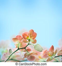 꽃의, 열대적인, 배경, 난초