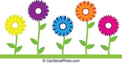 꽃, 다채로운