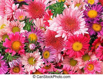 꽃, 배경