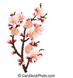 꽃, 버찌, 떼어내다, 가지, 배경