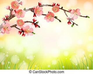 꽃, 버찌, 벗나무, 빛, 아침