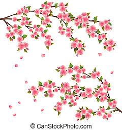 꽃, 버찌, 위의, -, 일본어, 나무, 벡터, 벗나무, 백색