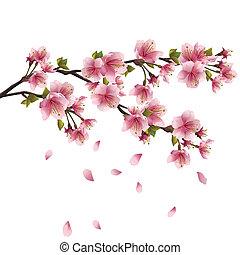 꽃, 벚나무, 벗나무, 일본어