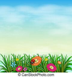 꽃, 색채가 풍부한, 정원