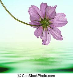 꽃, 외래의, 열대적인