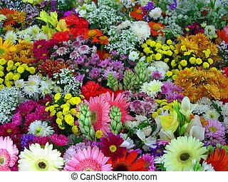 꽃, 전람