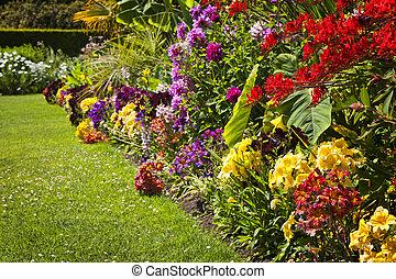 꽃, 정원, 다채로운