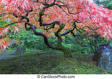 나무, 늙은, 정원, 단풍나무, 일본어