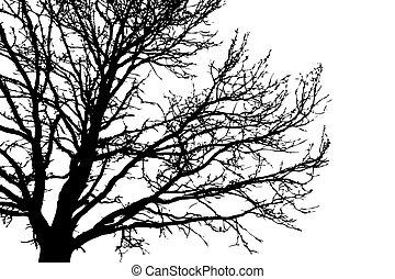 나무, 백색, 벡터, 실루엣, 배경