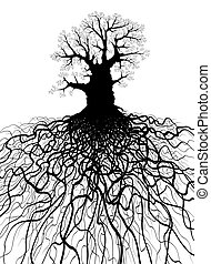 나무, 뿌리