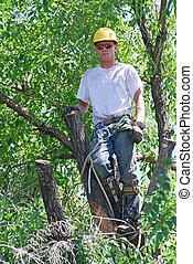 나무, 손질하는 사람