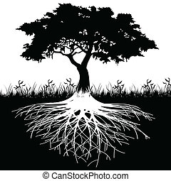 나무, 실루엣, 뿌리