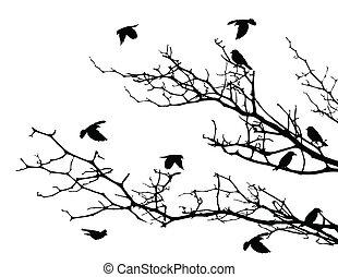 나무, 실루엣, 새