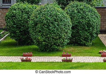 나무, 정원, 매니큐어를 칠하게 된다